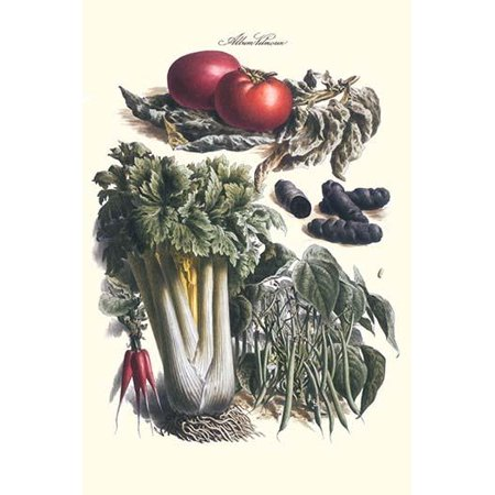 Vegetables Green Beans Purple sweet potato and tomato  Illustration from a famous French seed catalog and the vegetables that can be grown Poster Print by Philippe-Victoire Levque  de (Green Beans And New Potatoes With Ham)