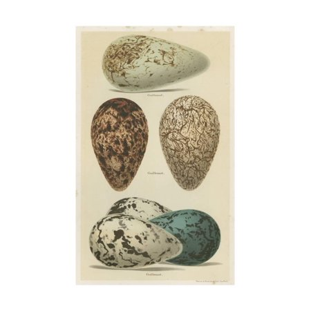 Seebohm Eggs (Antique Bird Egg Study I Print Wall Art By Henry Seebohm )