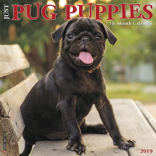 Willow Creek Press 2019 Just Pug Puppies Wall Calendar