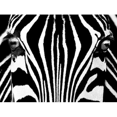 Black   White I Poster Print By Rocco Sette  31 X 23