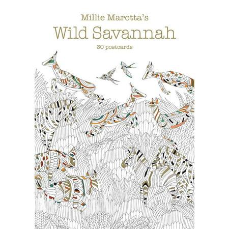 Millie Marotta Adult Coloring Book Marottas Wild Savannah 30 Postcards Paperback