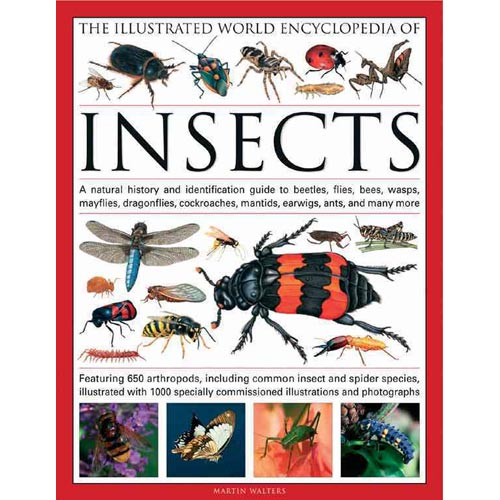 The Illustrated World Encyclopedia of Insects: A Natural History and Identification Guide to Beetles, Flies, Bees, Wasps, Mayflies, Dragonflies, Cockroaches, Damselflies, Cockroaches, Mantids, Earw