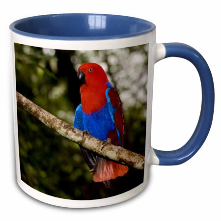 3dRose Papua New Guinea, Eclectus Parrot, tropical bird - OC12 BFR0002 - Bernard Friel - Two Tone Blue Mug, 11-ounce