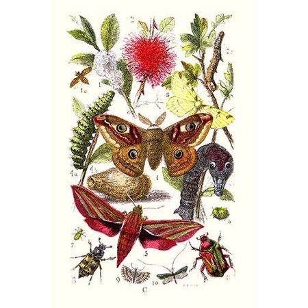 "Emperor Moth, Elephant Hawk Moth, Tortoise Beetle- Fine Art Canvas Print (20"" x 30"")"
