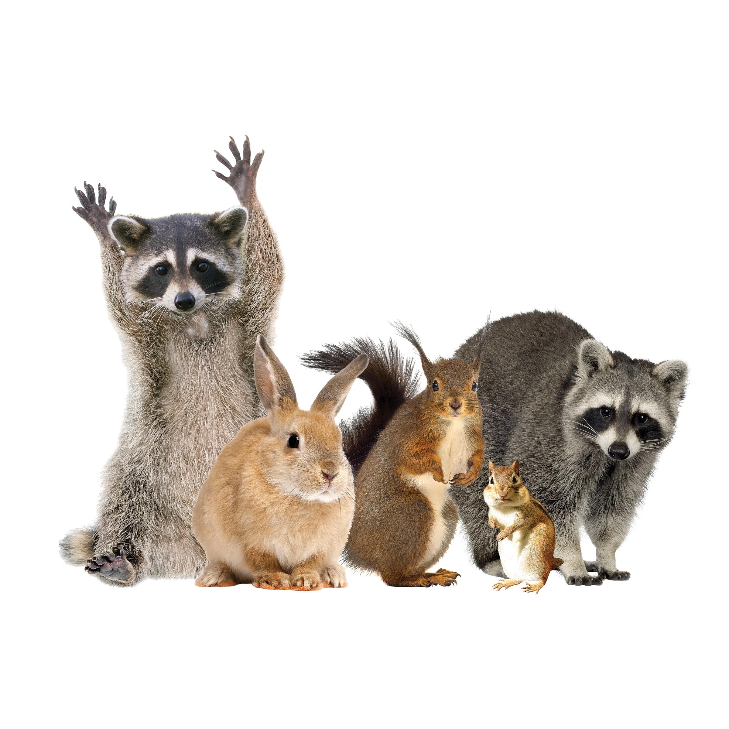 Woodland Animals Window Decal Cling - Raccoon & Friends Vinyl Sticker