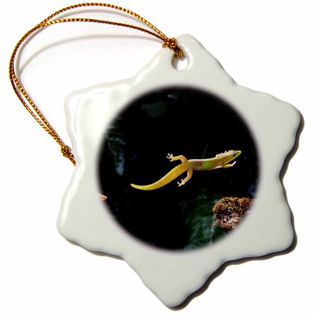 3dRose Gold Dust Day Gecko Leaping, lizard - NA02 DNO0255 - David Northcott - Snowflake Ornament, 3-inch