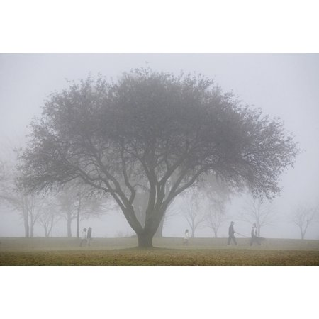 Family Walking Through Park In The Autumn Mist Ontario Canada Stretched Canvas - Mary Ellen McQuay  Design Pics (19 x (Best Parks In Ontario)