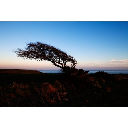 Wind sculptured Hawthorn Tree The Copper Coast County Waterford Ireland Canvas Art - Panoramic Images (27 x 9) Copper Wind Sculpture