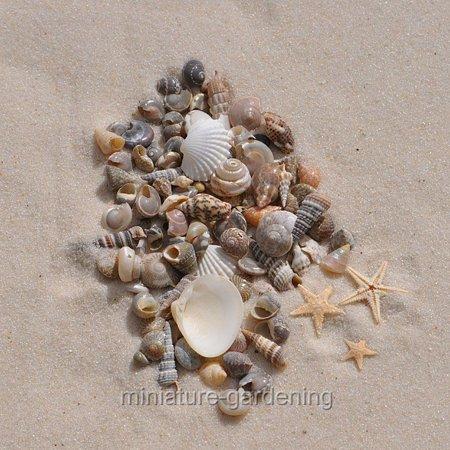 Miniature Tiny Starfish and Seashells for Miniature Garden, Fairy Garden