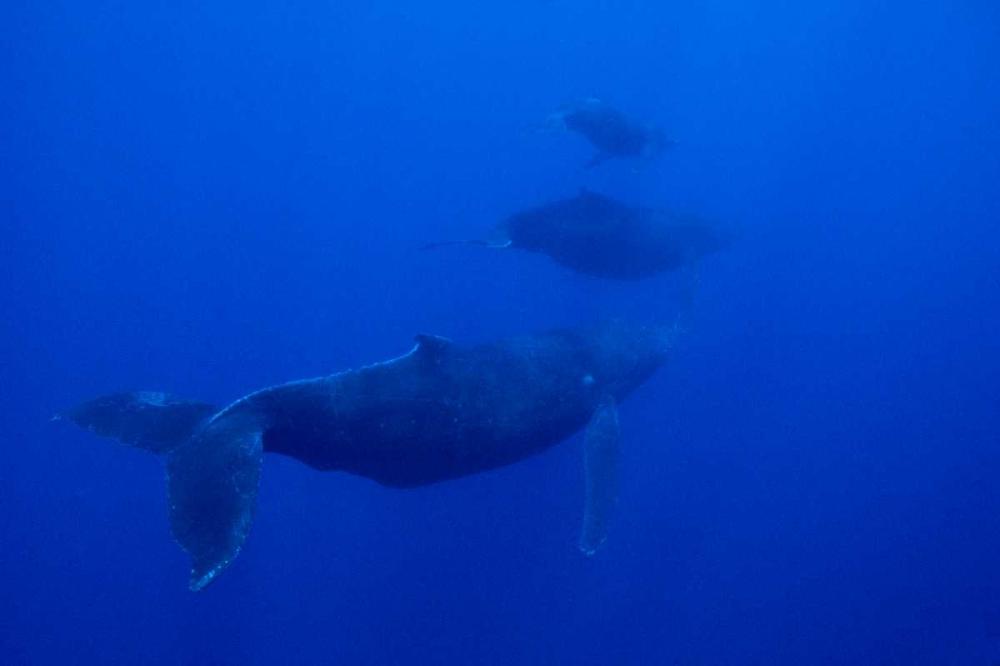 Male escort hawaii
