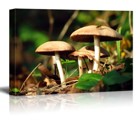 wall26 - Canvas Prints Wall Art - Wild Mushrooms in The Green Forest | Modern Wall Decor/Home Decoration Stretched Gallery Canvas Wrap Giclee Print. Ready to Hang - 12