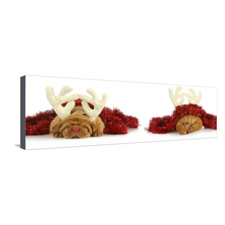 Puppy Rudolph - Dogue De Bordeaux Wearing Rudolph the Red Nosed Reindeer Costume Viewed from the Fr Stretched Canvas Print Wall Art By Willee (Cornelius From Rudolph The Red Nosed Reindeer)