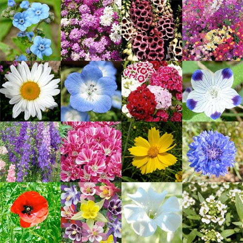 Packet of 3,000 Seeds, Partial Shade Wildflower Mixture (16 Species) Open Pollinated Seeds By Seed Needs