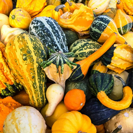 Large Mix Groud Garden Seeds - 1 Oz - Non-GMO, Heirloom Vegetable Gardening Seeds - Cucurbita pepo