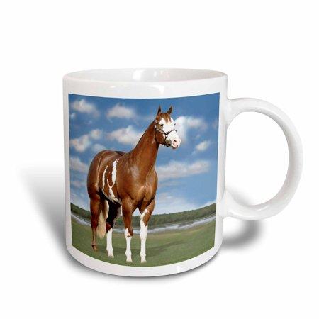 - 3dRose Champion Paint Quarter Horse, Ceramic Mug, 11-ounce