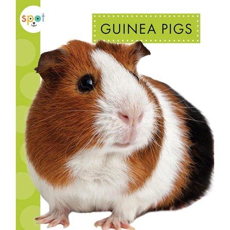 Guinea Pigs Walmart Com