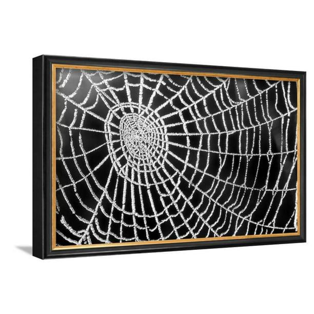Spider Web Sparkle Framed Art Print Wall Art By Erichan 16x10 5 Walmart Com Walmart Com