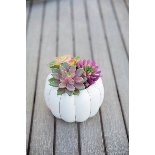 Gracie Oaks 6.5'' Desktop Faux Succulent Plant in Ceramic Pumpkin Pot