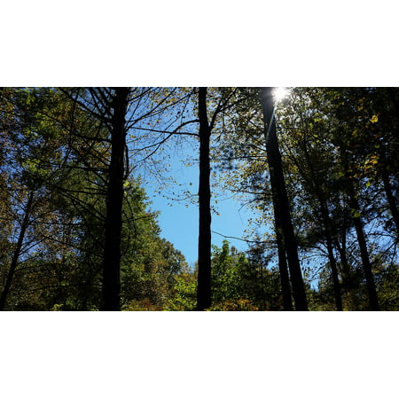 LAMINATED POSTER Blue Trees Sky Green Forest Nature Natural Poster Print 24 x 36