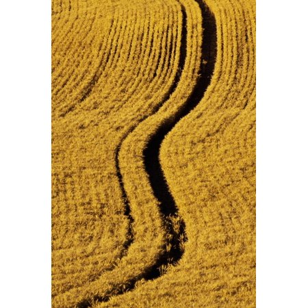Harvest By Terry - Golden Harvest Wheat, Palouse Country, Washington, USA Print Wall Art By Terry Eggers