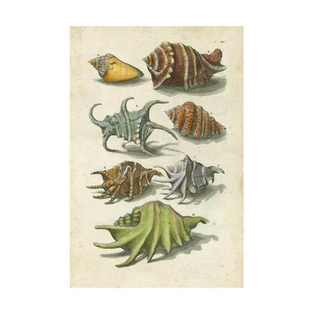 Conch Shell Illustre Print Wall Art By Vision Studio