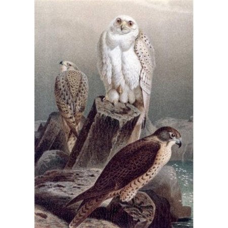 Posterazzi SAL900132582 Hunting Falcons Artist Unknown Poster Print - 18 x 24 in. - image 1 of 1