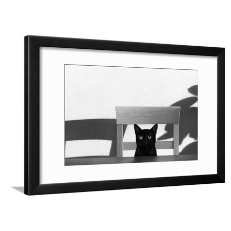 Where Is My Coffee? Black Cat Black and White Photo Framed Print Wall Art By Jon Bertelli