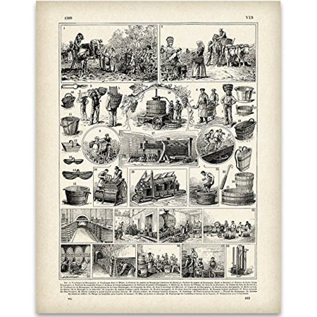 Vintage French Wine Making Illustration - 11x14 Unframed Art Print - Great Gift for Wine Lovers, Grottos, Wine Cellars and Home Bar Decor