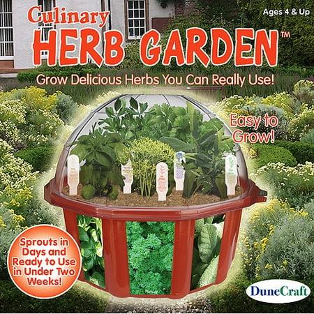 DuneCraft Culinary Herb Garden Kit - Walmart.com