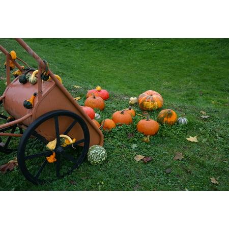 LAMINATED POSTER Wheelbarrow Pumpkin Man Decorative Squashes Pumpkins Poster Print 24 x 36 - Decorative Wheelbarrow