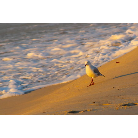 Canvas Print Foam Beach Seagull Water Morning Sunrise Tide Stretched Canvas 10 x 14
