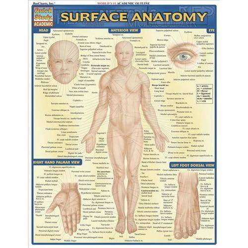 Surface Anatomy Quick Reference Guide