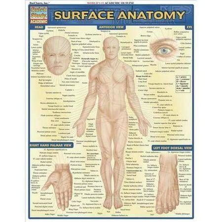 Surface Anatomy - Walmart.com