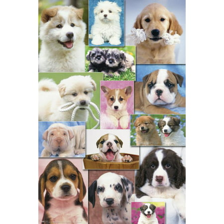 Trends International Puppies 2 Wall Poster 22.375