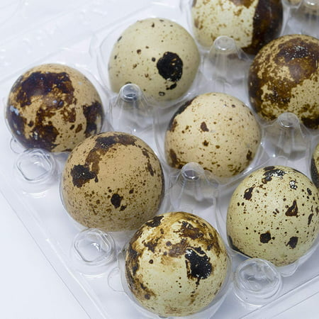 Quail Egg Cartons, Each Holds 12 Quail Eggs, Bulk Carton for Dozens of Small Eggs, Quail, Pheasant, or Grouse, Cartons Only No Eggs Included - Pack of 30](Butterfly Eggs For Sale)