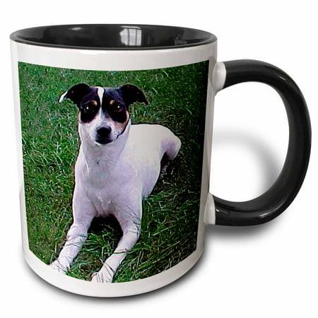3dRose Rat Terrier - Two Tone Black Mug, 11-ounce