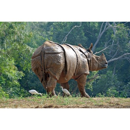 LAMINATED POSTER Rhino Animal Armor Strong India Rhinoceros Poster Print 24 x -