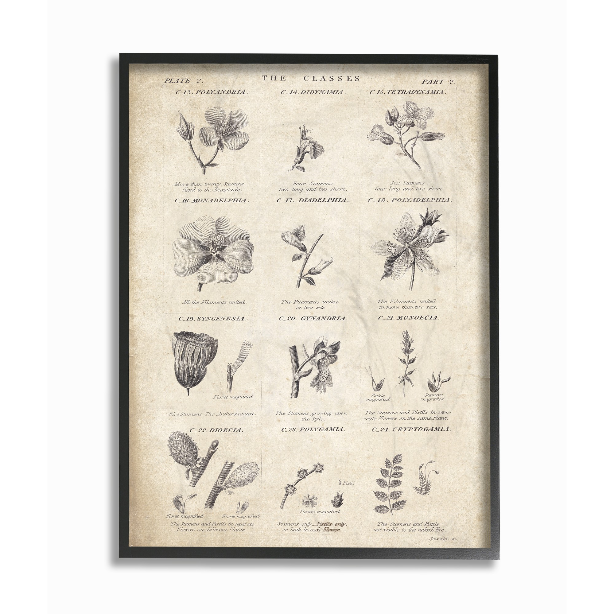 The Stupell Home Decor Collection Conversations On Botany Oversized Framed Giclee... by Stupell Industries