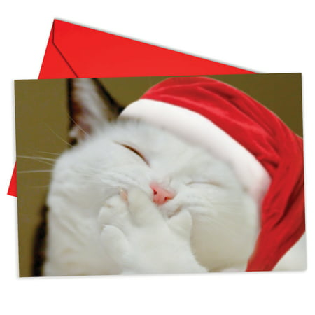 B6485JXSG Smitten Kittens Christmas Cards' Box Set of 12 Funny Merry Christmas Note Cards with Envelopes by NobleWorks ()