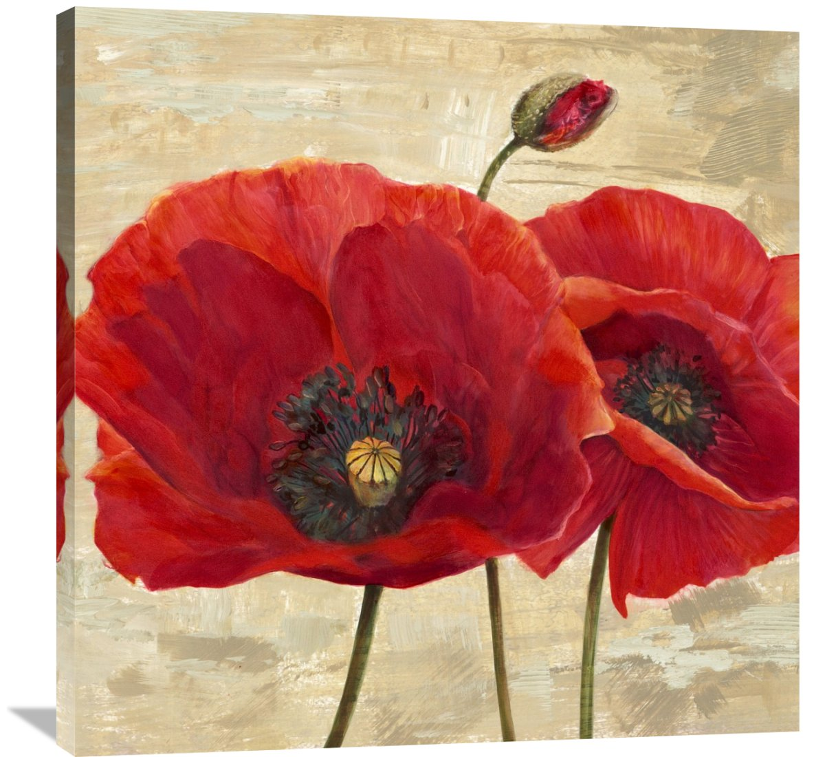 Global Gallery Cynthia Ann 'Red Poppies (detail II)' Canvas Wall Art