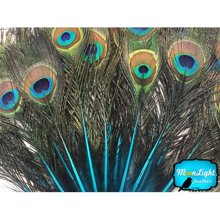 Peacock Feather Costume Tail (10 Pieces - Turquoise Blue Mini Natural Peacock Tail Body Feathers With)