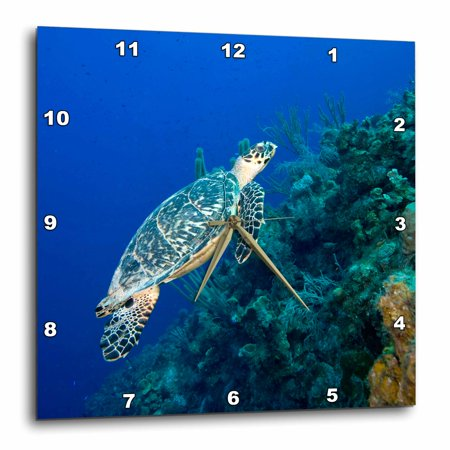 3dRose Cayman Islands, Hawksbill Sea Turtle and coral reef -CA42 PSO0091 - Paul Souders, Wall Clock, 15 by
