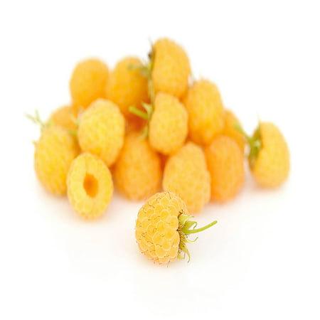 Anne Raspberry - 2 Golden Raspberry Plants - Everbearing - Organic Grown -