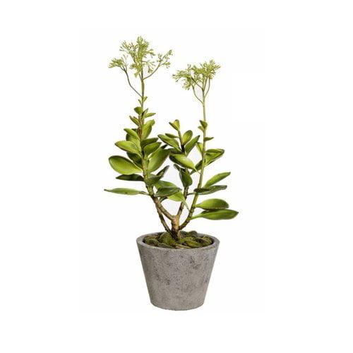 Ivy Bronx Kalanchoe Flowering Plant in Pot
