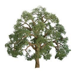 JTT Scenery 96043 O Scale Professional Tree, Live Oak ()