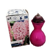 Fondant - Bubble Gum Pink Hyacinth Bulb in Hot Pink Glass Vase & Gift Box