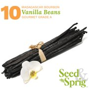 Seed & Sprig Madagascar Bourbon Vanilla Beans | 10 Pack | Bulk Whole Vanilla Pods & Seeds for Baking, Coffee, Brewing, Cooking | Gourmet Grade A | 6+ inches Non-GMO Long, Plump, Moist