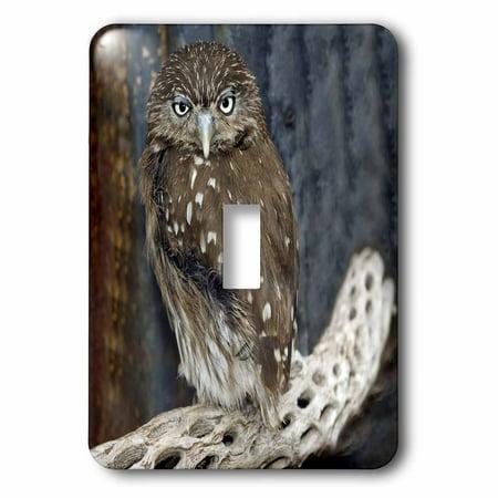 3Drose Ferruginious Pygmy Owl   Us03 Bfr0131   Bernard Friel  2 Plug Outlet Cover