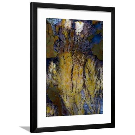 Priday Plume Agate, OR Framed Print Wall Art By Darrell Gulin