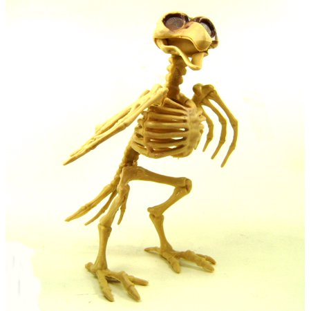 BIRD SKELETON Raven Crow Bones Spooky Decor Party Decoration Creepy Accessories - Skeleton Party